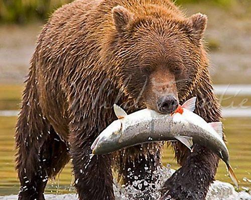 Realisatie website Wild Frontiers